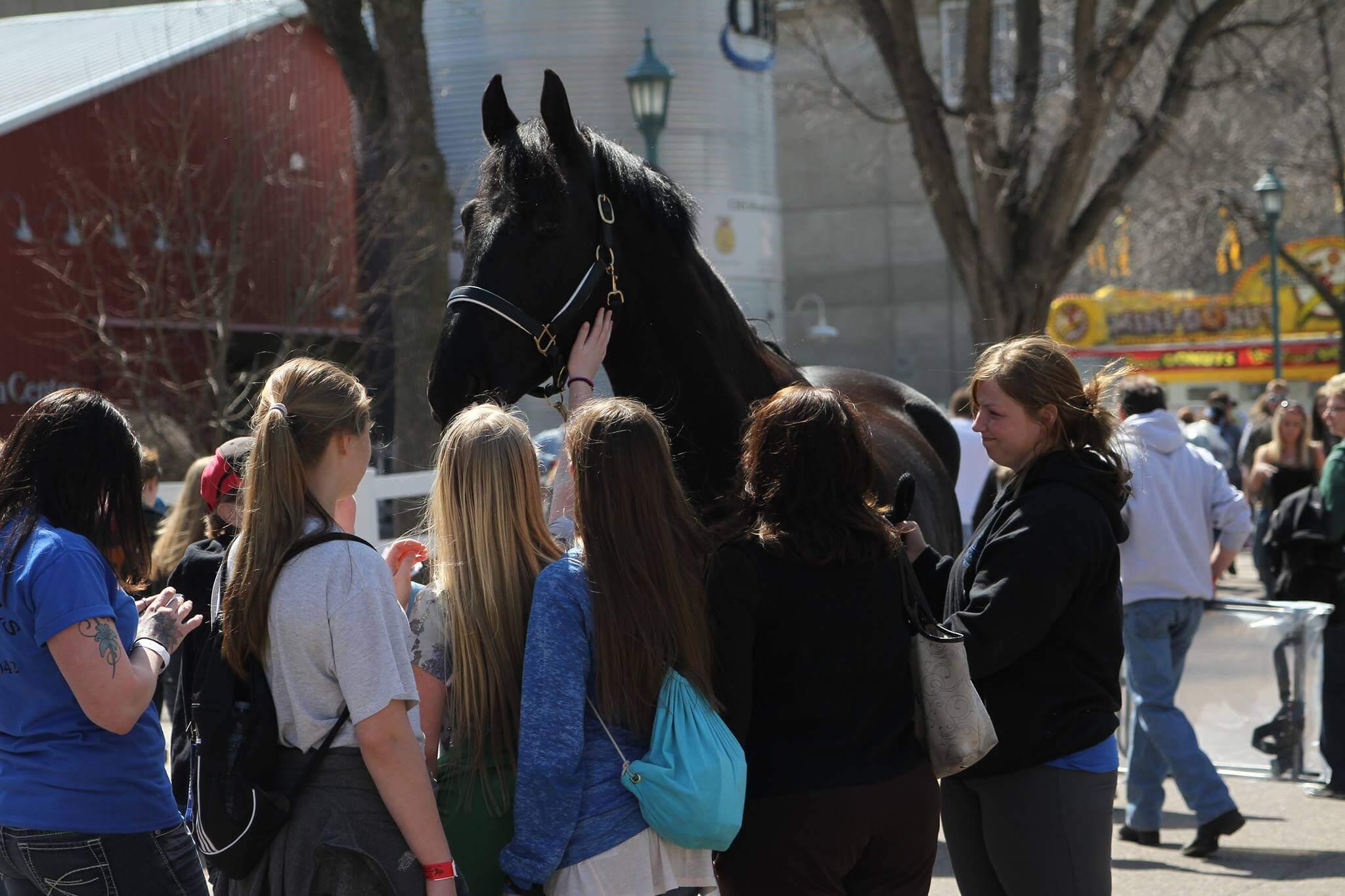 Minnesota Horse Expo Minnesota State Fairgrounds